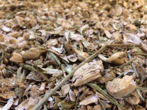 Geöffnete Samenschoten und Stengelreste der Radieschen