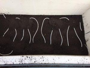 Schlaufenförmiges Verlegen der elektrischen Kabelheizung BIOGREEEN im beheizten Frühbeet