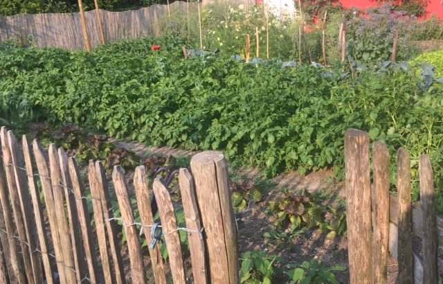 Gesamtansicht Gemüsegarten durch Gartentor